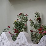 Algunas Rosas de Nathaly