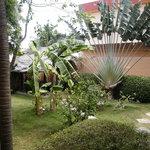 The garden 2