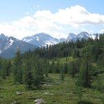 Trail to Gibbon Pass