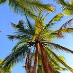 Beautiful Palms At Playa Samara