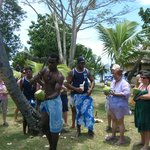 coconuts anyone
