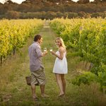 Visit world class wineries on a wine tour