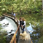 The Margaret River-dog friendly walks in forest