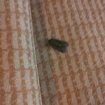 Bugs In Room