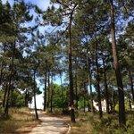 Golf pathway