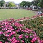 円の中央に芝生広場があります。