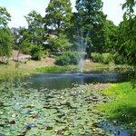 静かな池のほとり
