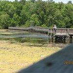 The bridge where the turtles are