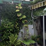 A small corner of the roof-top garden with the dedicated gardener
