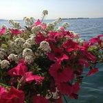 Blick auf den See ( hinter Blumen )