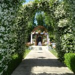 Tuscan gardens jasmine archway