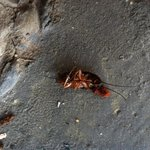 Let not forget the Roach I threw, out of the room @ Days Inn Port Royal (Nasty)