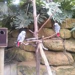 mondo verde tropische vogels