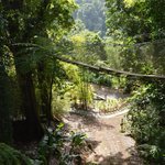 Pont du jardin