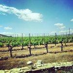 Stagecoach wine tour