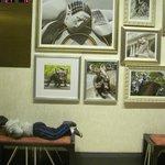 PASILLO A LOS ASCENSORES(MI hijo descansando en los sillones)