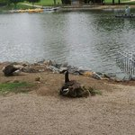 Frank Liske Park
