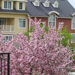 Rooms overlook pedestrian walk or courtyard - spring blooms in May