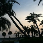 Lights on the palm trees come on at sunset