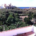 Blick auf Bananenplantage von Terrasse