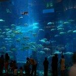 acquario per le immersioni ,vetrata inerna