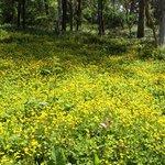 第五福竜丸裏の林の中は花が自然に群生しています