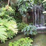 夢の島熱帯植物館の中は南国ムード