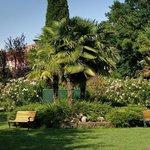 Park palm