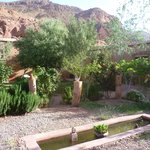 garden again