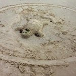 sand turtle on whitehaven beach