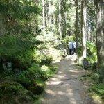 A shaded walk around the Kleine Arbersee