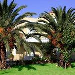Palm trees - Garden