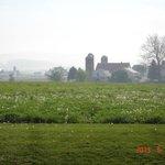 Morning farm scene, from Kitchen Kettle Village, Intercourse, PA