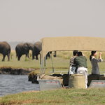 Chobe River Cruise - a highlight of your stay!