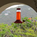 Hummingbird House Foto