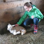 Visiting with a new lamb