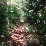 Trail into the beach