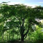 Ein Schoner alter Baum