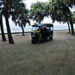 乗り合いタクシーと亜熱帯植物