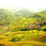 Rice golden