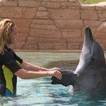 delfin dance