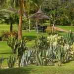 Vista Jardim