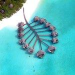 Lagoon Villas - Aerial View