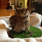 The receptions little owl
