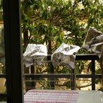 """Armes anti-pigeons.....admirez le """"""""point de vue"""""""" du studio"""