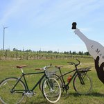 Visit local Wineries on a Bicycle Wine Tour!