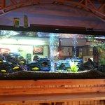 Beautiful aquarium at Doug's Fish Fry Skaneateles, NY