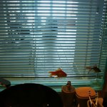 Fish tank between bedroom and bathroom