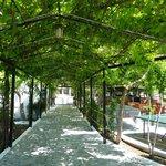 shady walkway