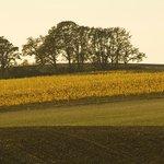 Our estate vineyard, Larkin Estate, in West Salem